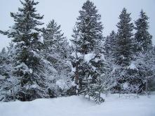 Walkin' in a winter wonderland....